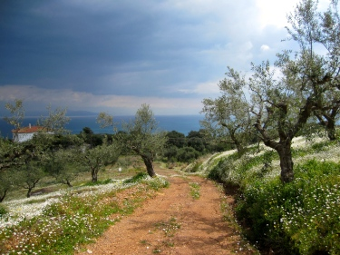 Olive grove overlooking the Ionian Sea